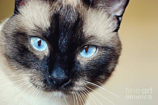 Crystal Blue by Liz Oliver