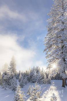 Winter Landscape-Crystal Clear Snowy Day by Feryal Faye Berber