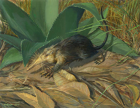 Cuban Solenodon by ACE Coinage painting by Michael Rothman
