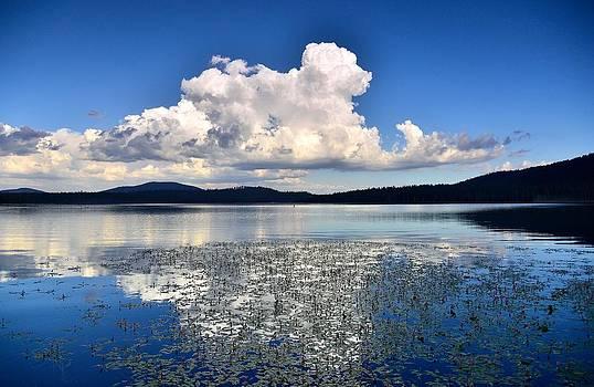 Cumulonimbus Over Water Lilies by Rich Rauenzahn