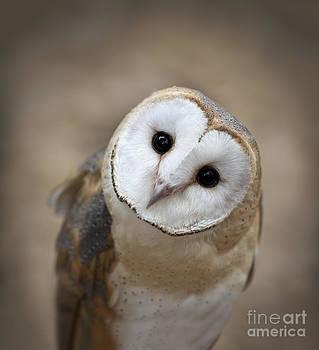 Curious Barn Owl Closeup Portrait by Brandon Alms