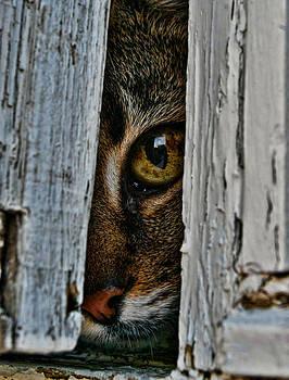 Curious Cat. by Konrad Ragnarsson