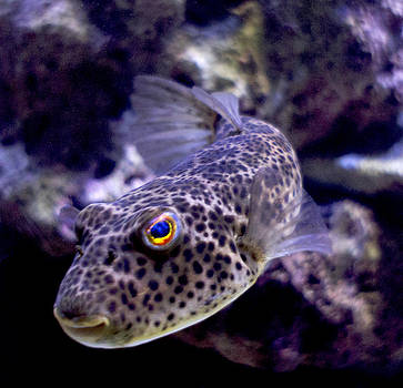 Curious Fish by Cindy Bray
