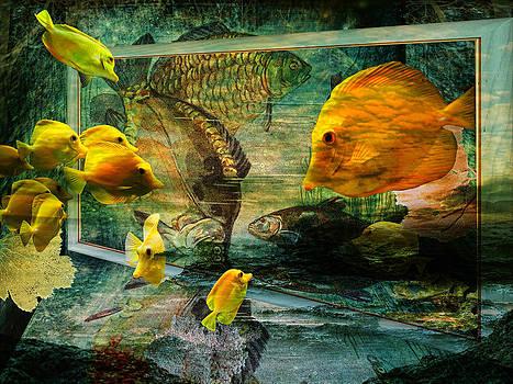 Pamela Phelps - Curious Fish