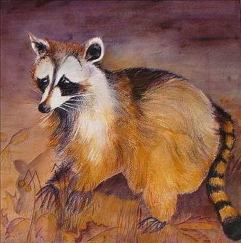 Curious Racoon by Georgia Annwell