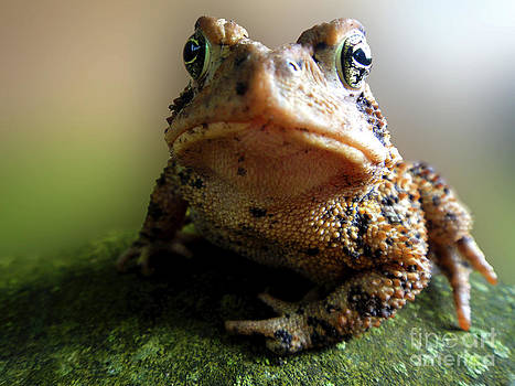 Curious Toad by Tylir Wisdom