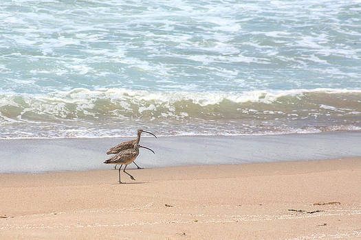 Curlews on the Beach by Bob and Jan Shriner