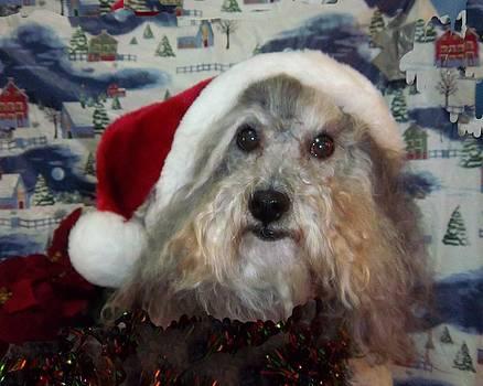 Curlys Christmas by Rosalie Klidies