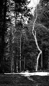 Curve by Amee Stadler