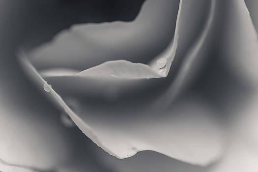 Curves by Kaye Seaboch
