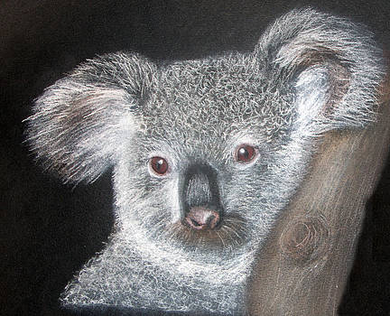 Cute Koala by Mary Mayes