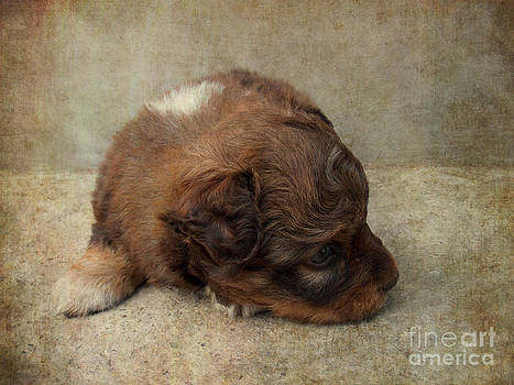 Cute puppy by Snezana Petrovic