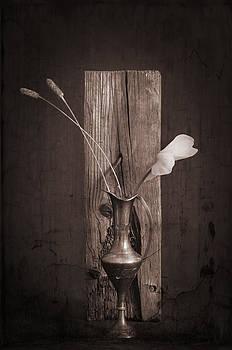 Cyclamrn by Jim Larimer