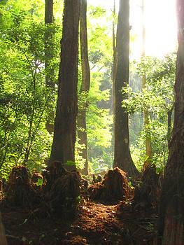 Cypress Forest by Karen Lindquist