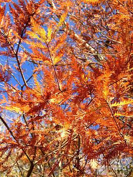 Janet Felts - Cypress Leaves