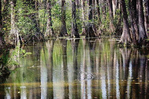 Cypress Mirror by Shawn King