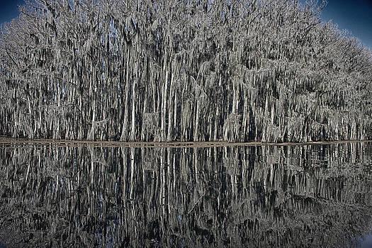 Mary Lee Dereske - Cypress Reflections at Caddo Lake