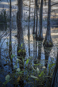 Debra and Dave Vanderlaan - Cypress Swamp