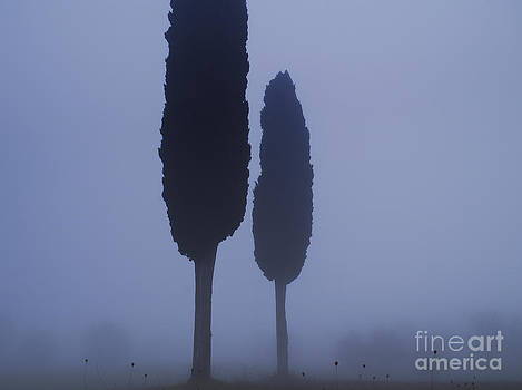 Cypress with teasels by Paul Greene