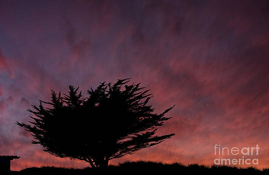 Dan Friend - Cyprus tree at sunset