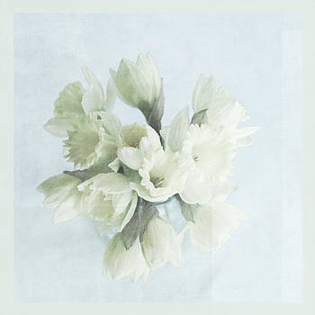 Daffodil Blue by Beverly Cazzell