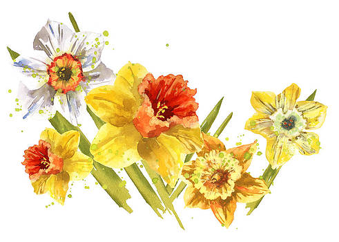 Daffodil Painting by Alison Fennell