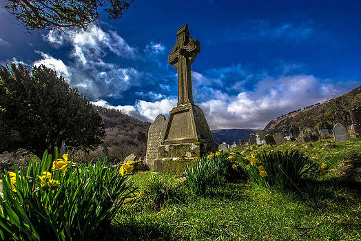 Daffodils at Glendalough by DM Photography- Dan Mongosa