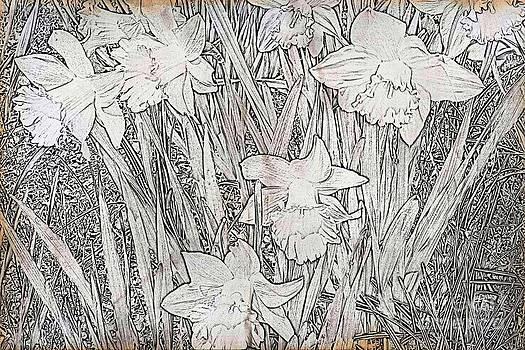 Daffodils by Judy Palkimas