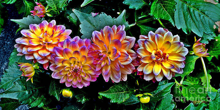 Dahlia Watercolor by Jeff McJunkin