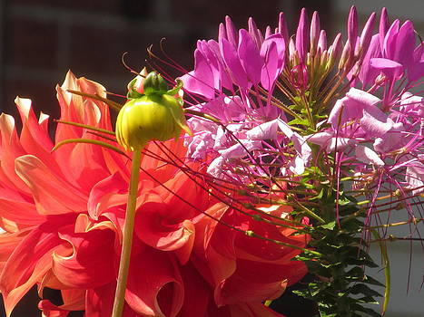 Alfred Ng - dahlia with spider flower