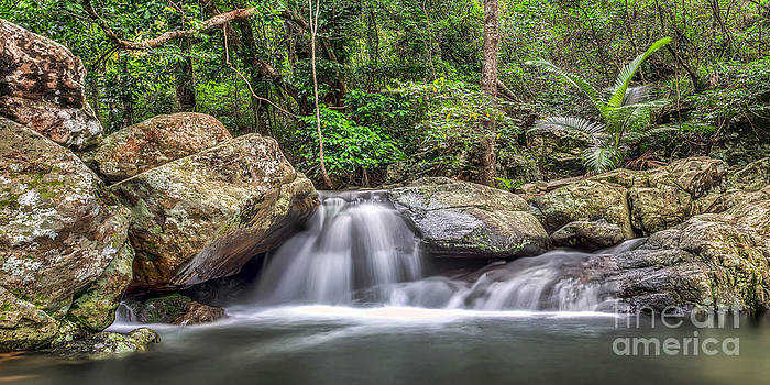 Daintree Rainforest by Shannon Rogers