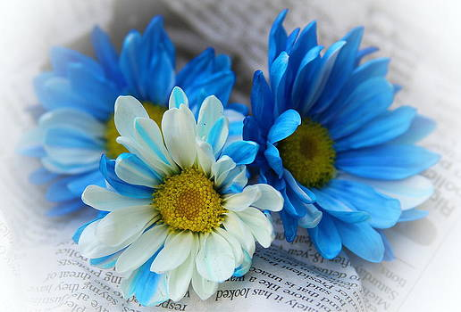Daisies And Newspaper by Cathy Lindsey
