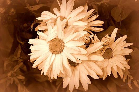 Daisies by Karen Kersey
