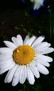 Daisy Beads by Courtnee Epps