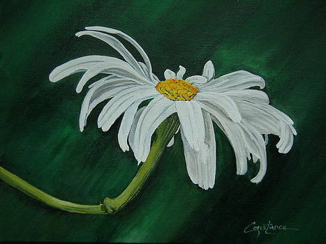 Daisy by Connie Rowsell