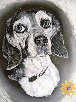 Daisy Dog by Kevin F Heuman