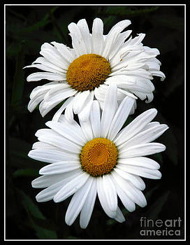 Daisy Duet by Avis  Noelle