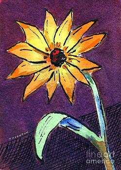 Daisy on Dark Background by Diane Thornton