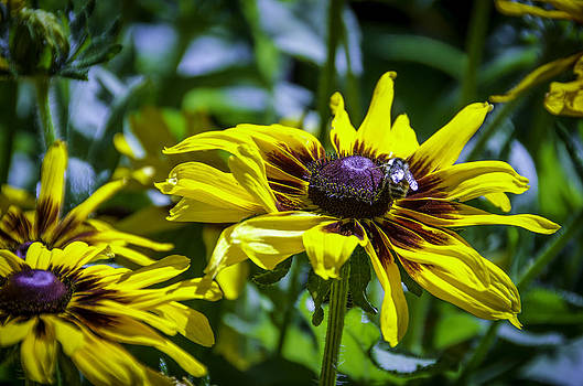 Daisy Power by Leesa Toliver