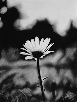 Daisy by Samantha Howell