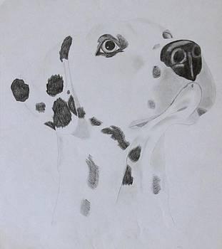 Dalmatian by AR Annahita