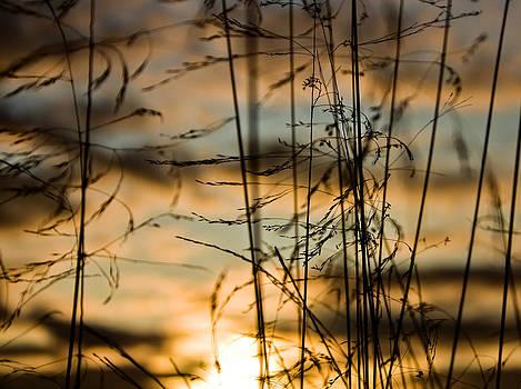 Dance of evening wind by Igor Isachenko