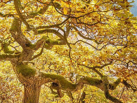 Dancing oak dryad. autumn yellow by Martin Liebermann