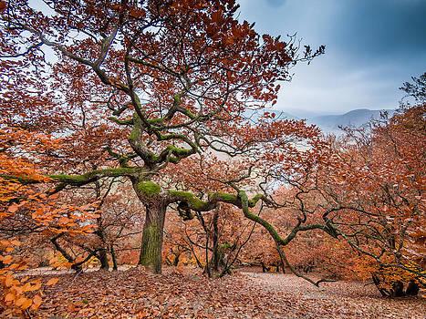Dancing oak tree dryad - autumn red by Martin Liebermann