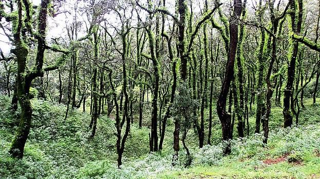 Jyoti Vats - Dancing Trees