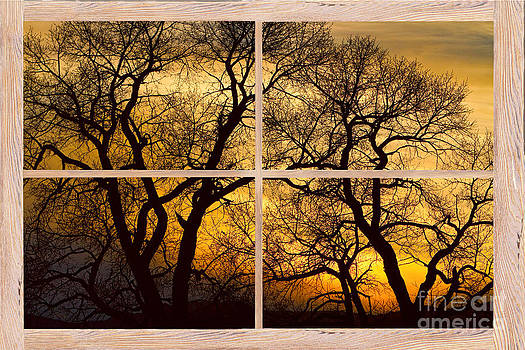 James BO  Insogna - Dancing Trees Sunset Picture Window Frame Photo Art View