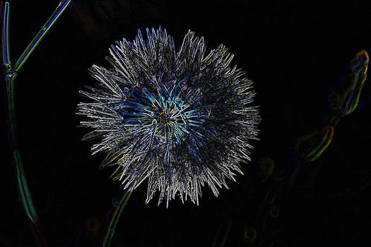 Amanda Collins - dandelion