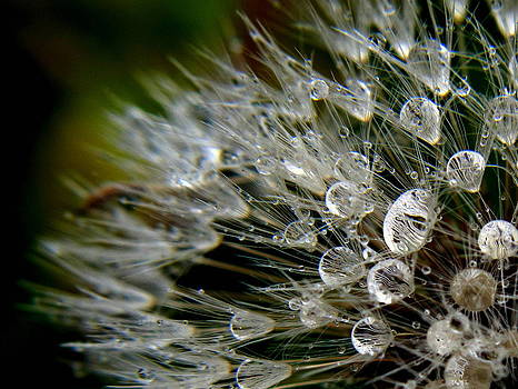 Dandelion Jewels by Suzy Piatt
