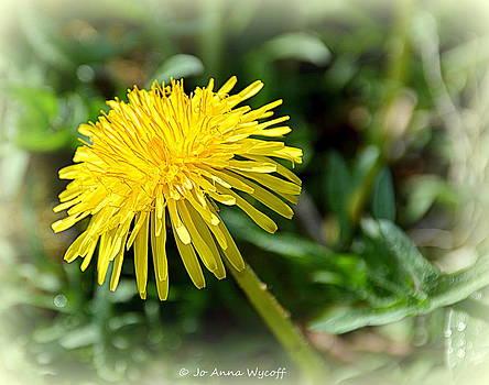 Dandelion by Jo Anna Wycoff