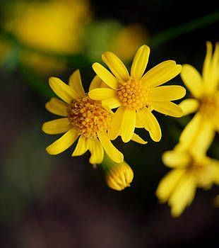 Dandelions and little Creatures by Kim Pate